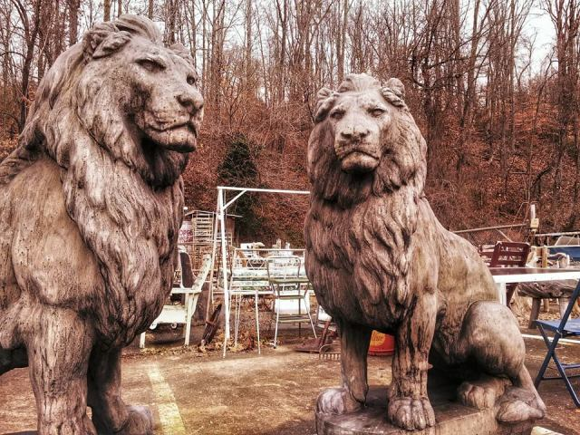 Yesterday's Photo of Lions