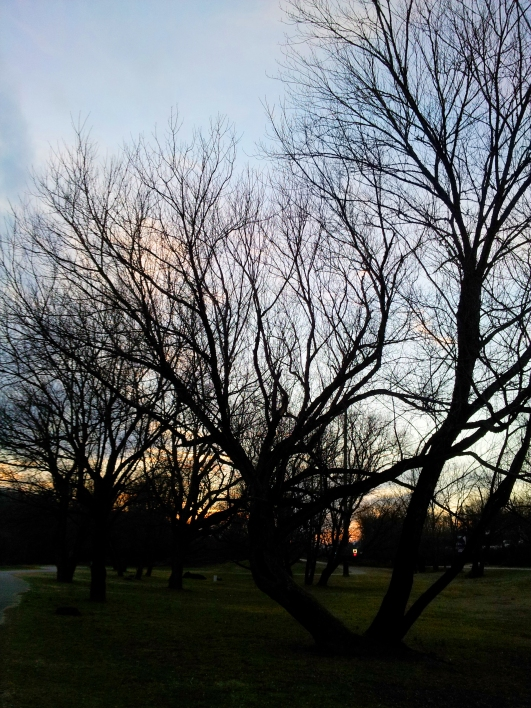 More Sunsets and Trees