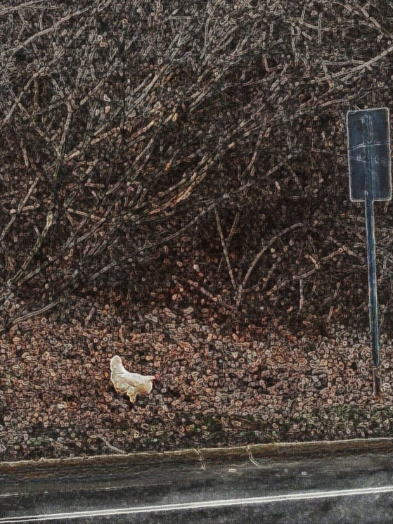 The Story of the Chicken