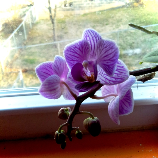 tiny kitchen orchid
